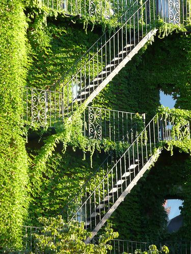 Ivy Escapes by bettlebrox, via Flickr. Fire Escapes covered in Ivy on Marlborough Street, Boston, MA, USA.