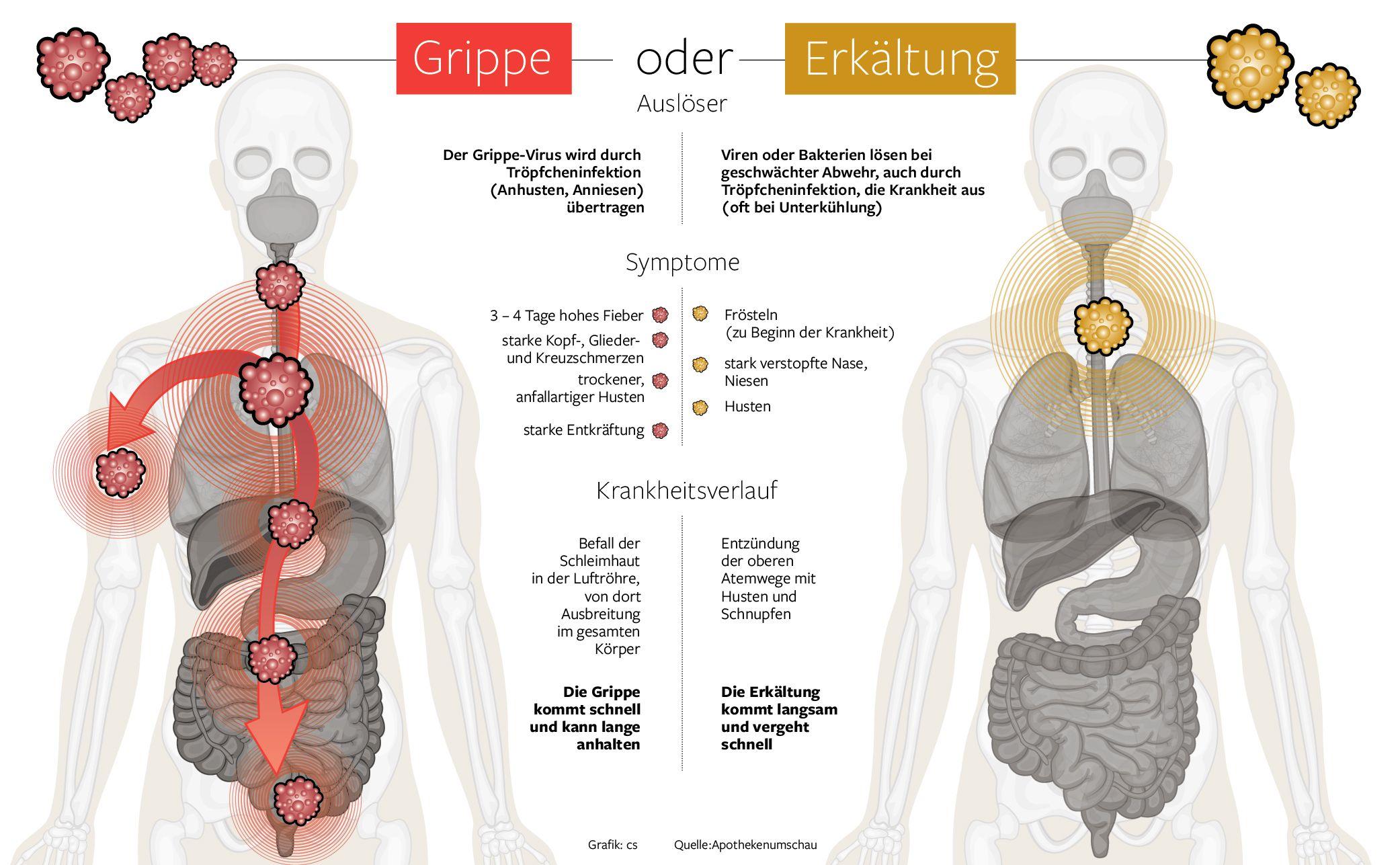 Wunderbar Welche Organe Machen Die Atemwege Bis Fotos - Physiologie ...