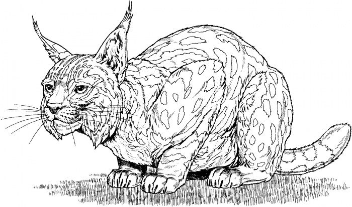 intricate cat coloring pages for
