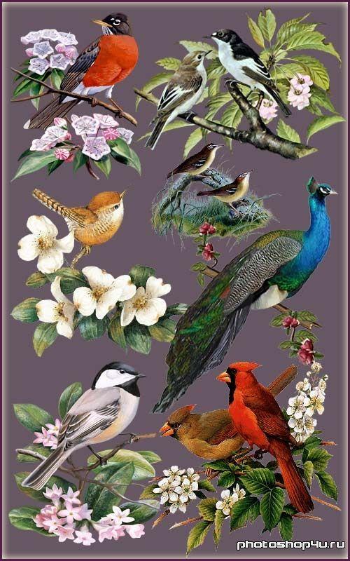 Клипарт - Птицы в цветах | Цветы, Птицы, Шаблоны
