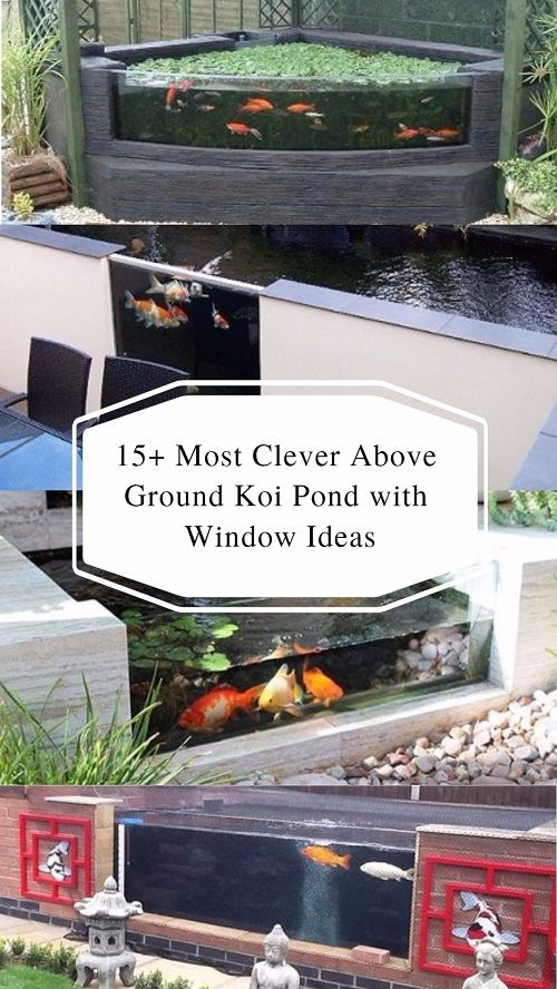 20+ Most Clever Above Ground Koi Pond with Window Ideas | Koi, Pond ...