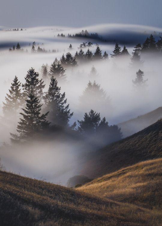 f o g a h o l | marin county, california by Lorenzo Montezemolo