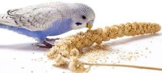 What Do Birds Like Eating Berts Pet Supplies Blog Pet Birds Pet Supplies Pets