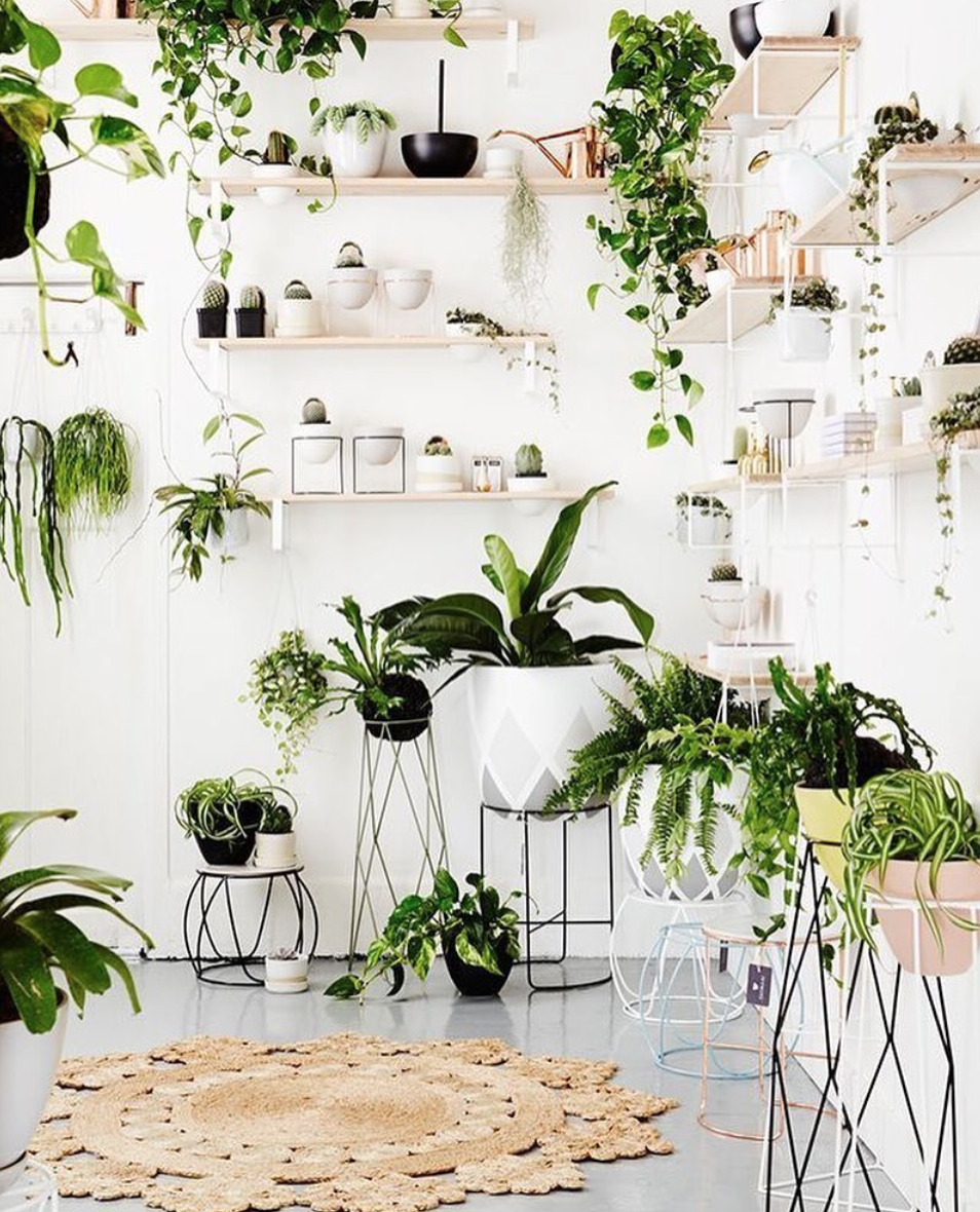 Slidin\' Into Your DMs: PLANT LOVE   für zu Hause, zu Hause und ...