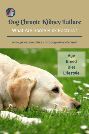 Dog Kidney Failure A Guide to Acute & Chronic Kidney