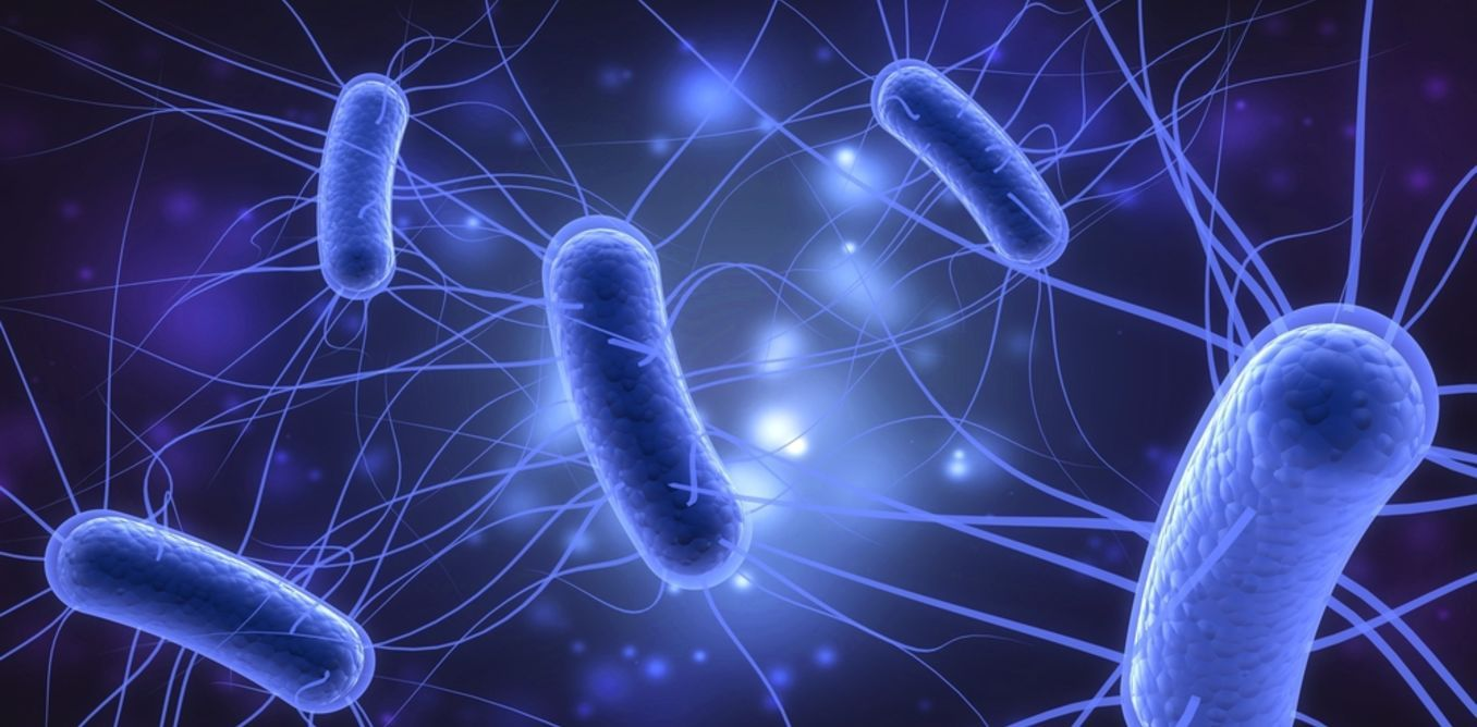 Immune System May Play Crucial Role In >> How The Brain Helps The Body Fight Bacteria The Discovery
