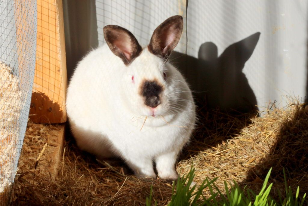 Why you should let your rabbits burrow