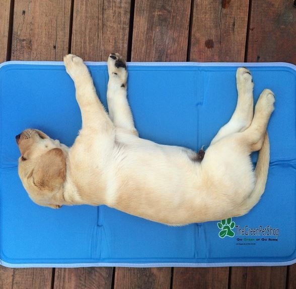 The Best Cooling Beds To Get Your Hot Dog Chilling Cool Dog Beds Dog Cooling Mat Cool Pets
