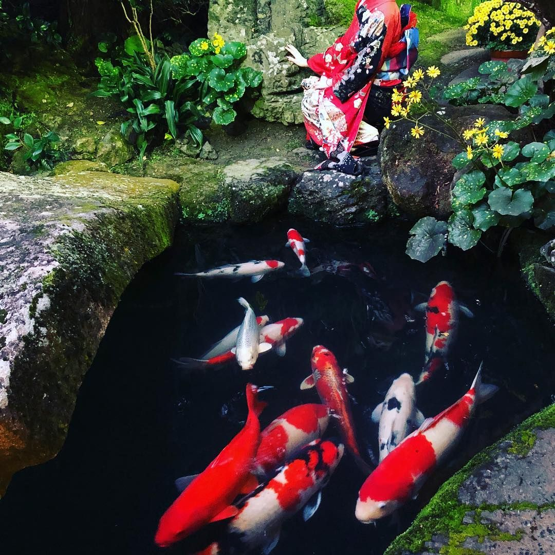 7cfd143ba8a2043df19bebe3935a866f - The Koi Whisperer Sanctuary & Japanese Gardens