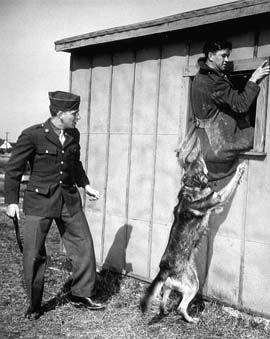 Military Policedog Training In Virginia During World War Ii