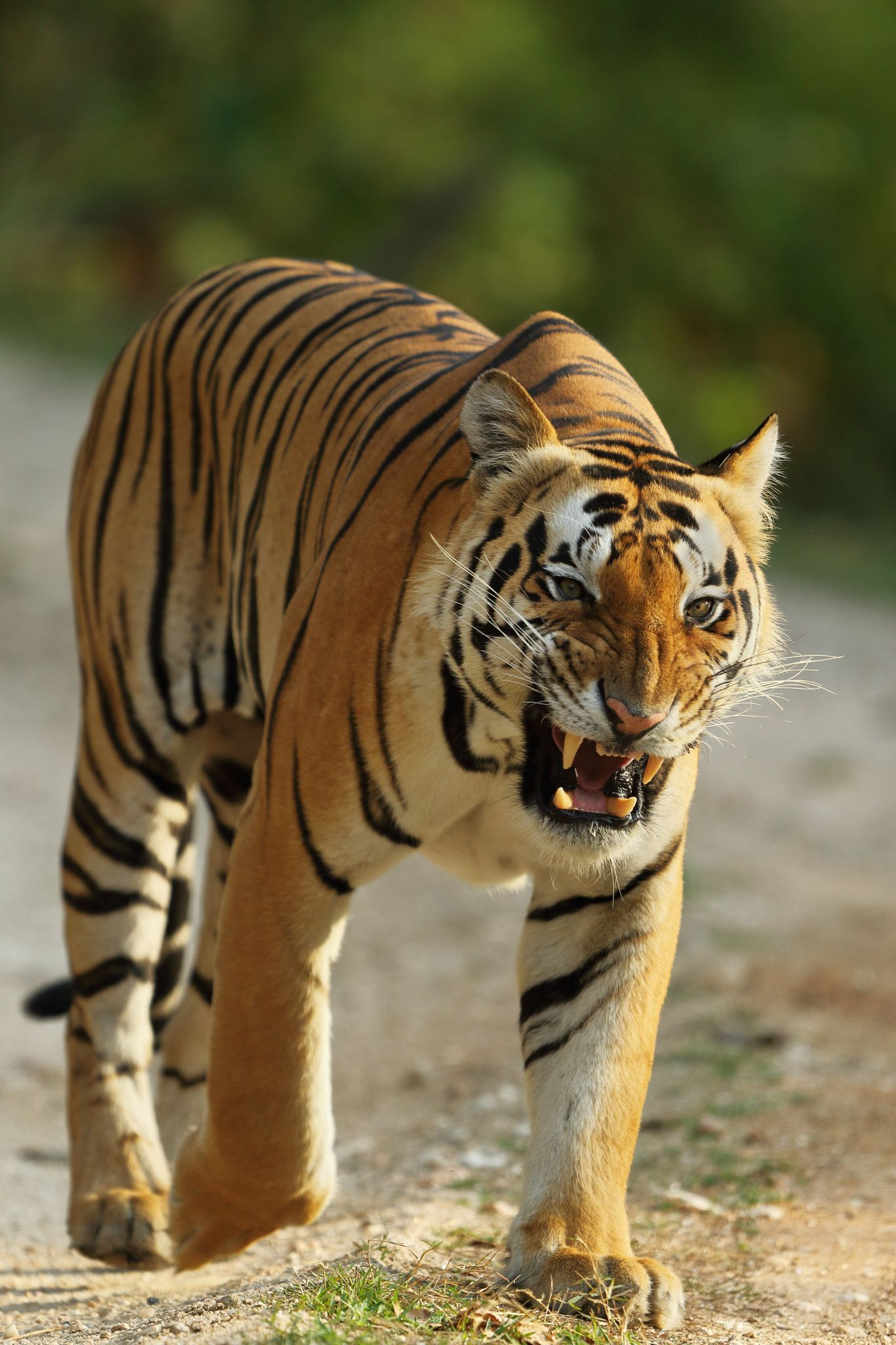 Showing Teeth by Sarosh Lodhi on 500px