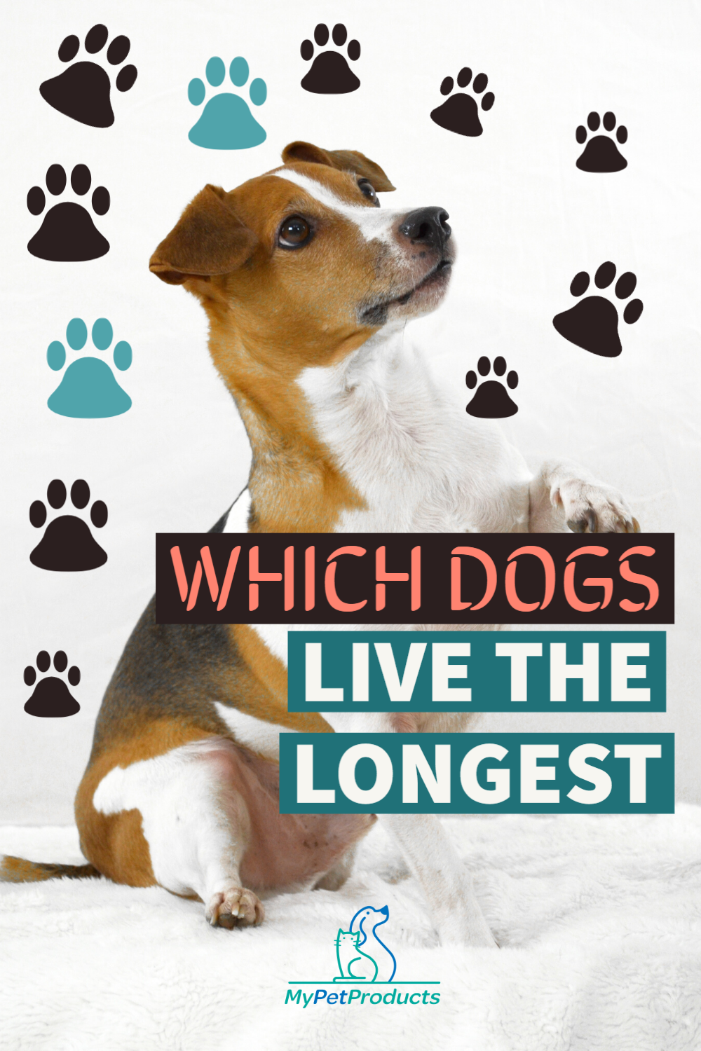 Pin On Facts About Dogs