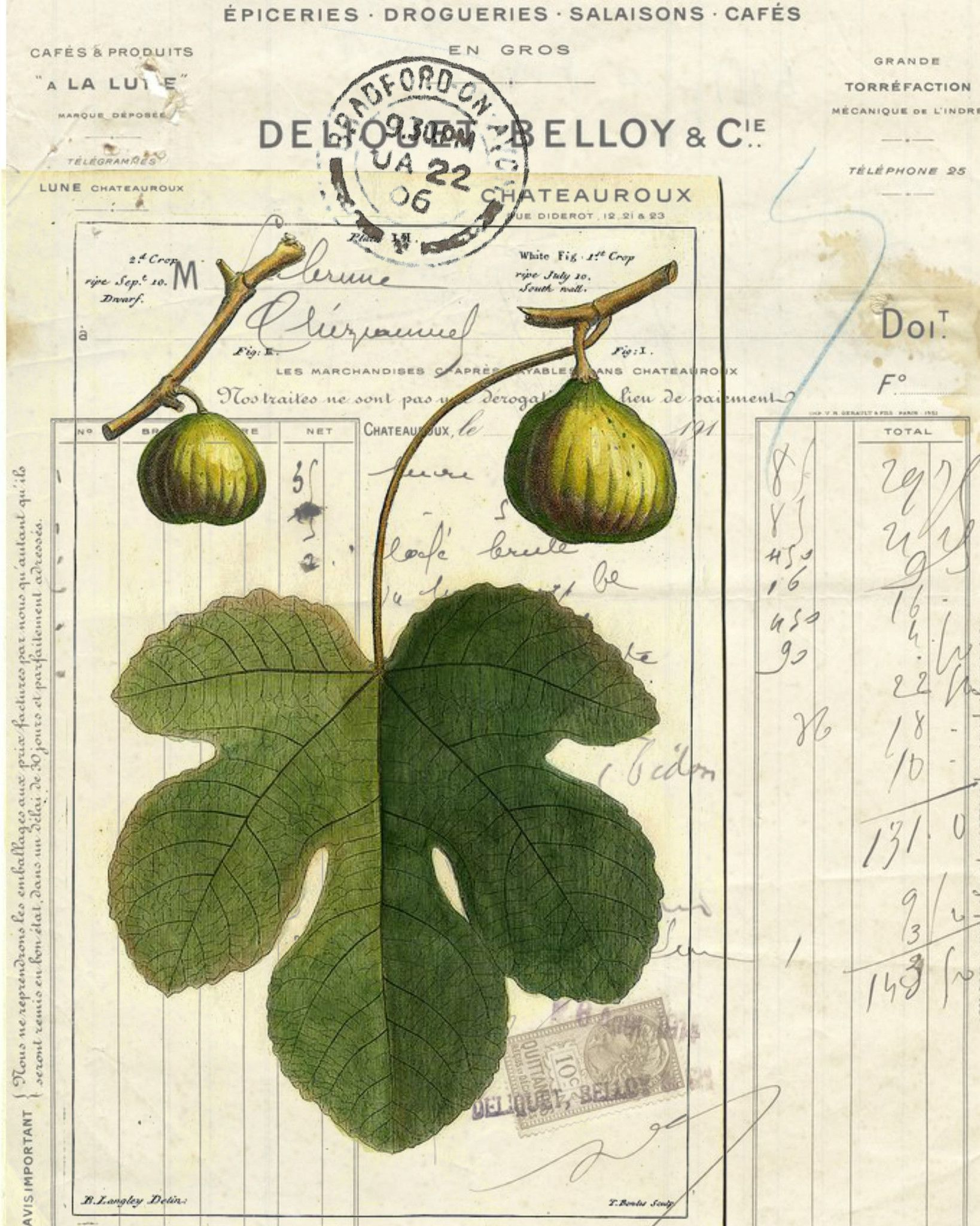 Botanical Print Fig