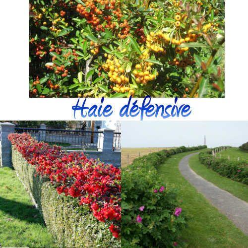 Achat kit de haie d fensive kit de 7 plantes deco for Achat plante jardin