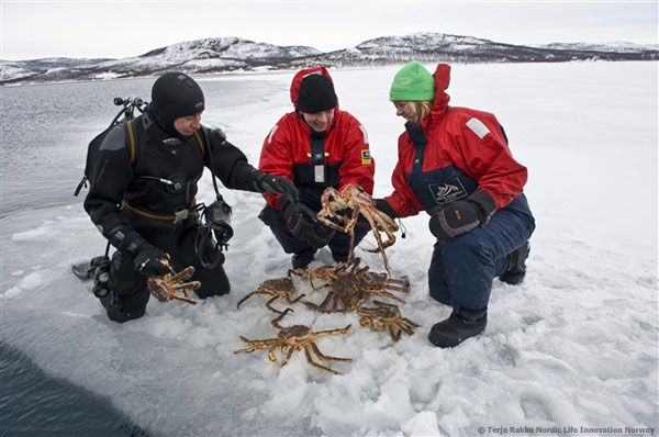 Catch your own lunch! (King Crab Safari  at Kirkenes, Norway)