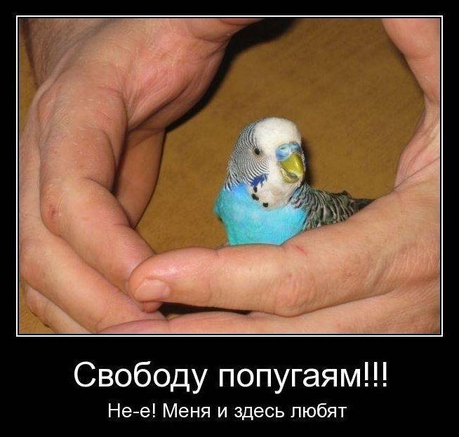 Приколы про попугаев картинки