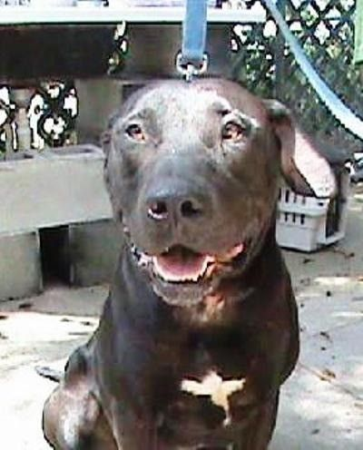 Where Is Tucker Florida Rescue Dog Disappears Animal Rescue Konsortium 441 S Woodland Boulevard Deland Fl 32720 386 Rescue Dogs Dogs Animal Rescue