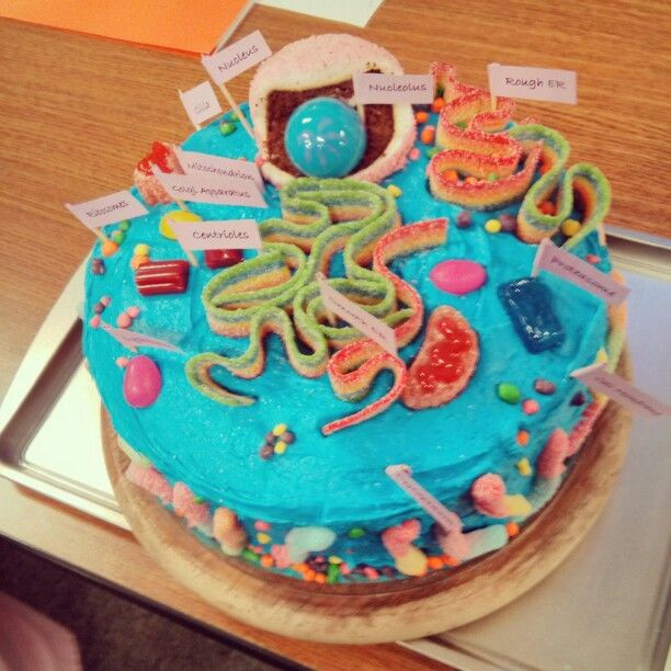 My friends cake cell model! | Cell model, Animal cell ...