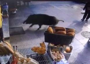 TV & ΔΙΑΦΗΜΙΣΗ: Δείτε πανικό στην Κωνσταντινούπολη, από ένα αγριογ...