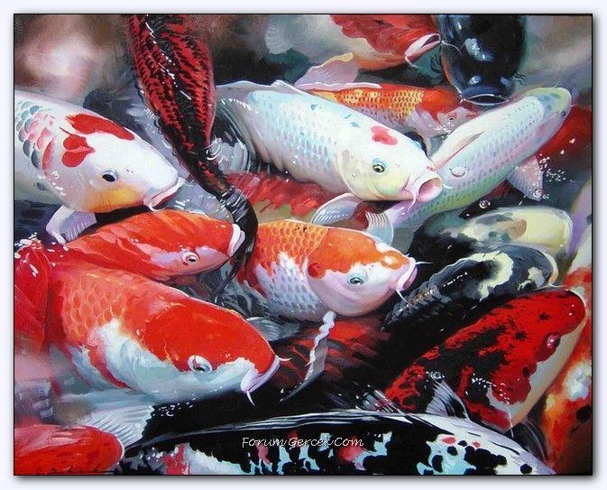 Chung Shek Cinli Ressam Forum Gercek ปลาคราฟ ปลา ส ตว เล ยง