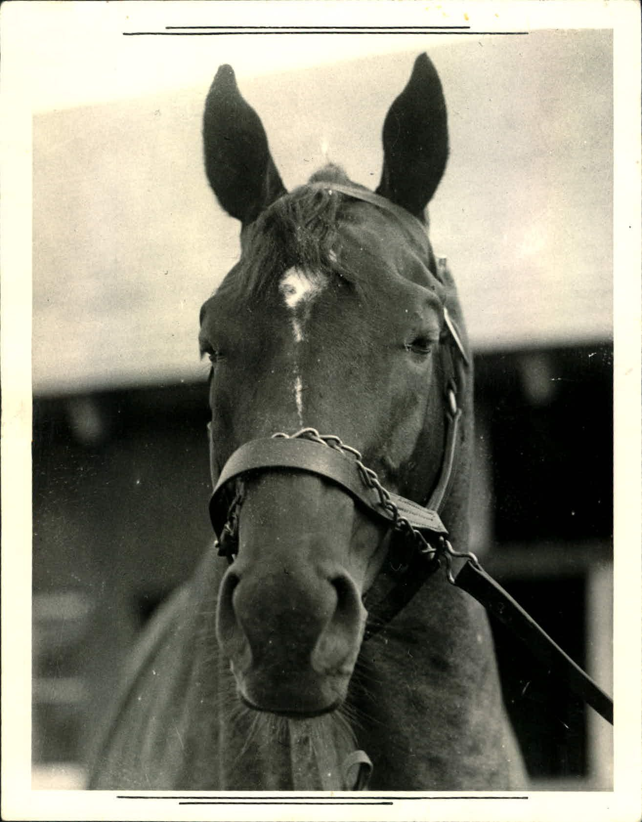 1937 Man o' War racehorse. 1 of the greatest Thoroughbred race horses of all time.