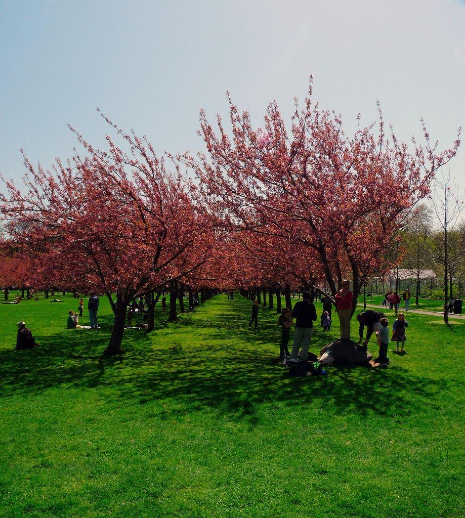 15 Inspirational Brooklyn Botanical Garden Wedding Cost