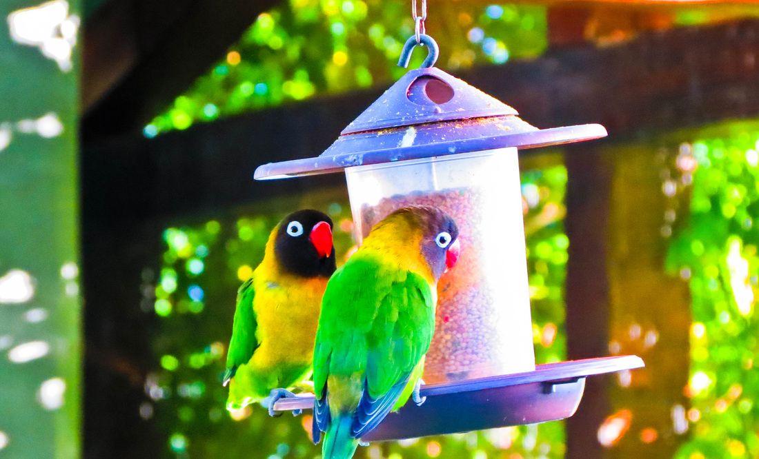 Tropical Birds at La Mortella Gardens, Ischia. From Ischia