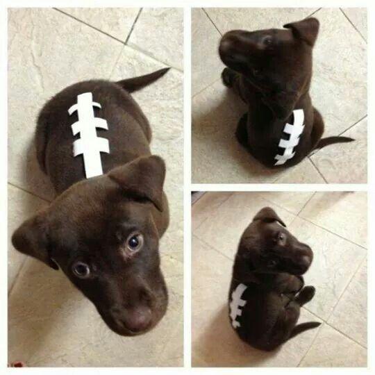 Chocolate Football Lab Cute Dog Costumes Halloween Animals Diy