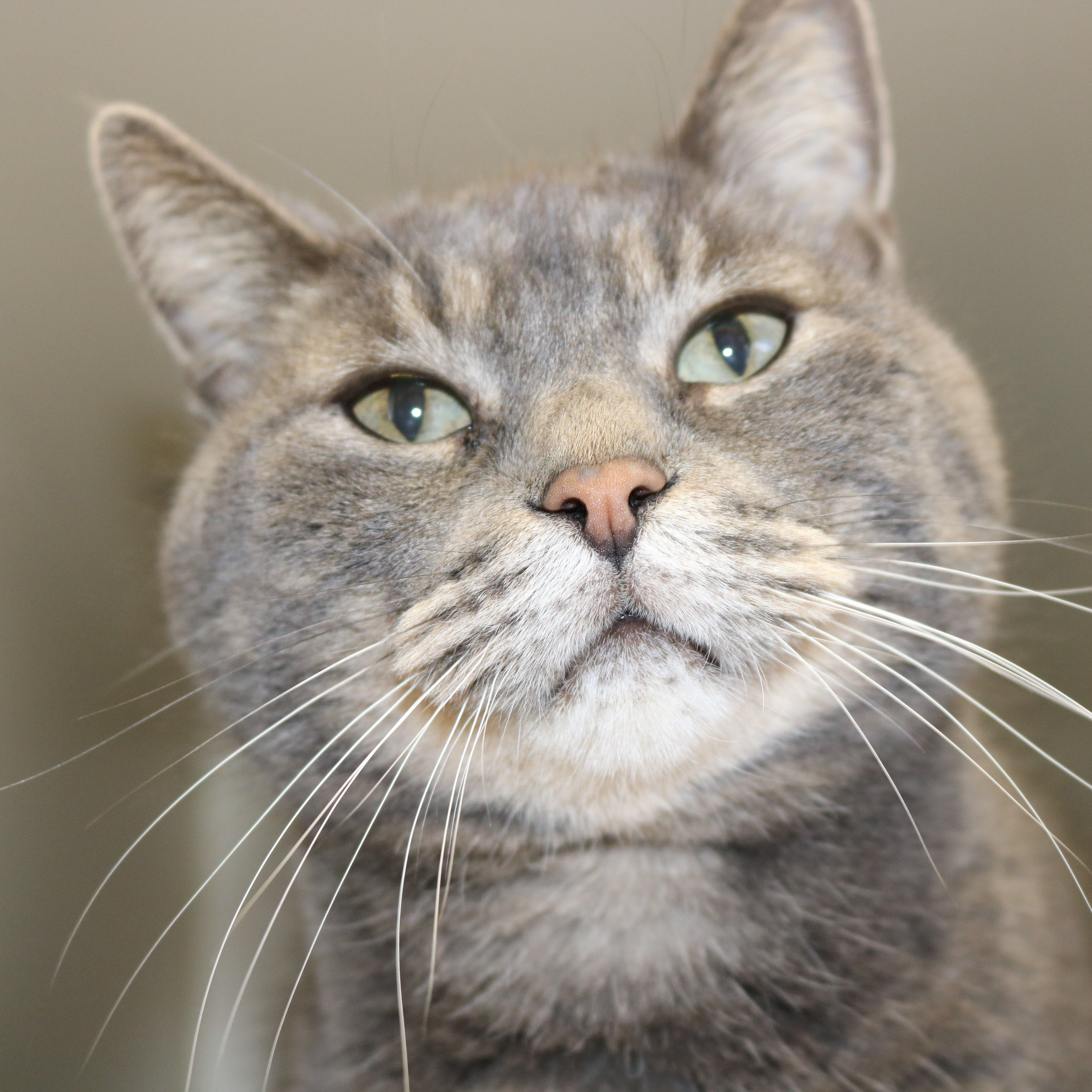 Amstel Pawsitive Match Rescue Foundation Calgary Based Dog And Cat Rescue Cat Rescue Cat Adoption Animal Jokes