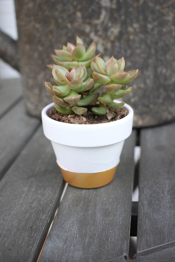 Terracotta Cactus Pot Succulent Pot Hand Painted White Succulent Pots Gold Flower Pot Cactus Pot