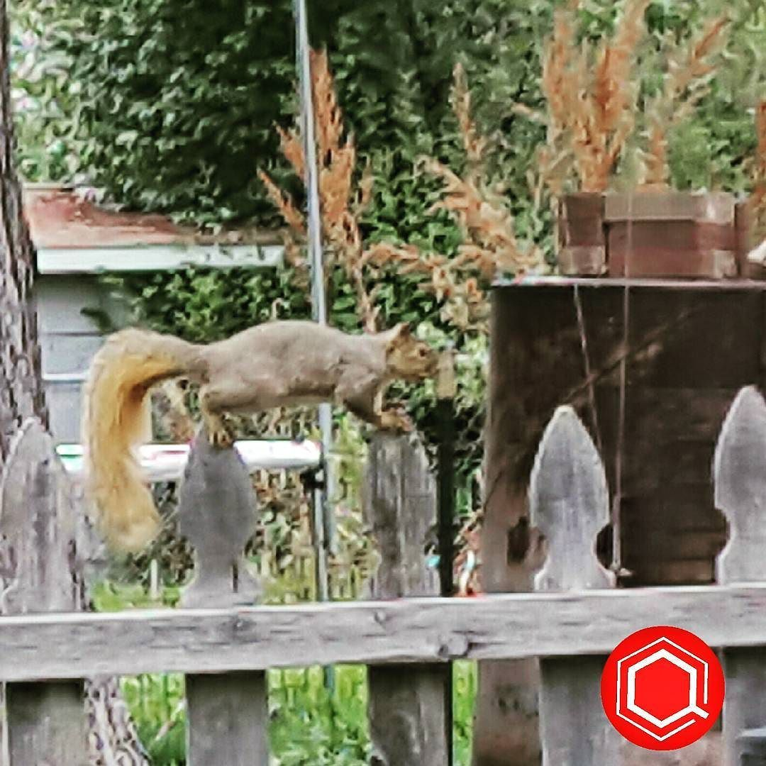 squirrel posing for the camera in my backyard nature