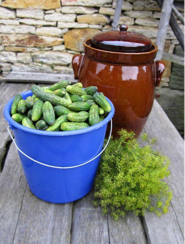 cucumbers and dill - ////Czech recipe