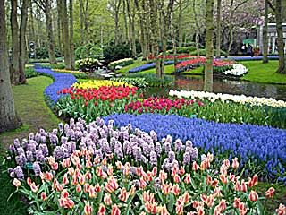 Holland Tulip Festival I Would Love To Go One Of These Days - Holland tulip festival