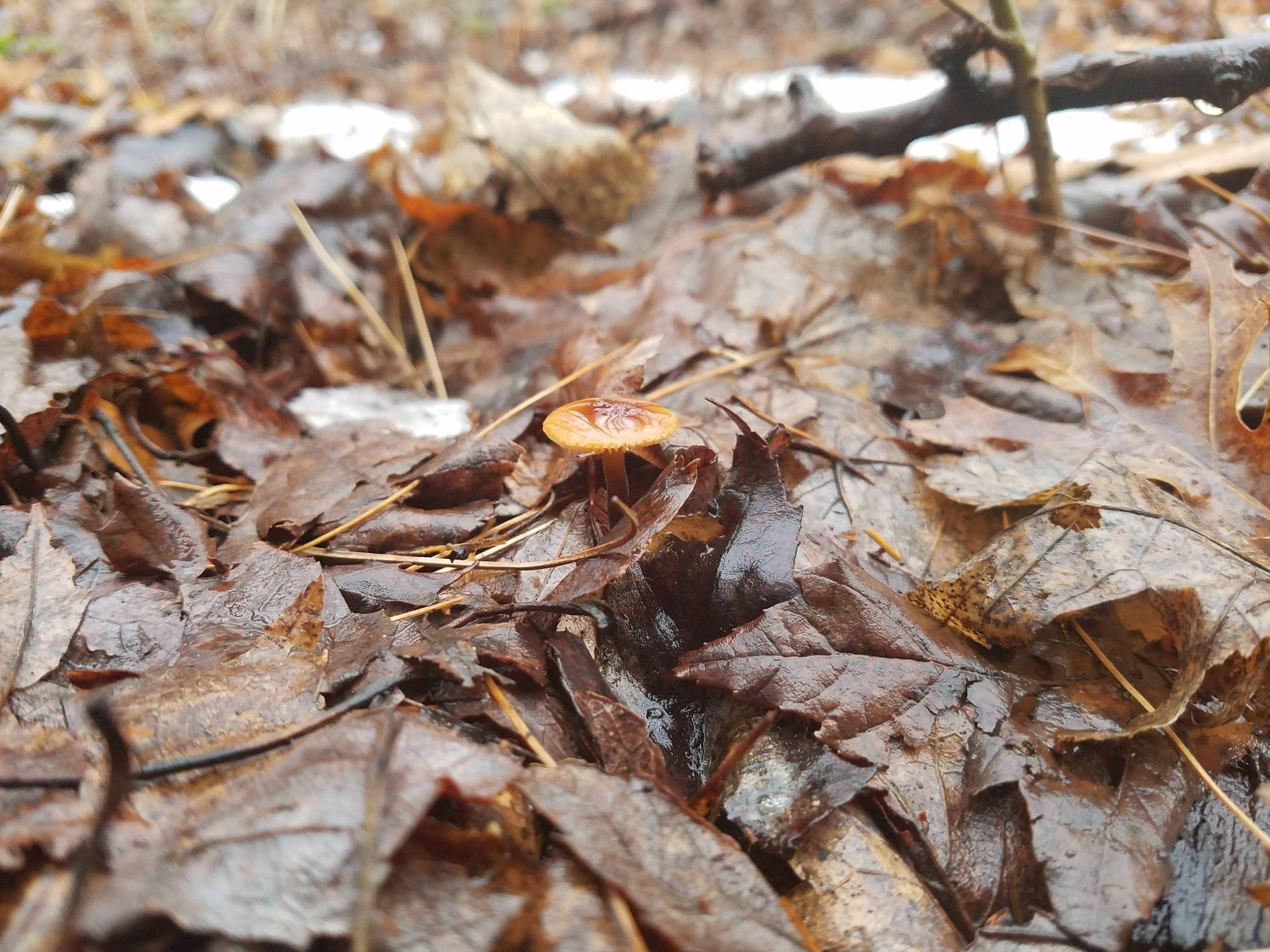 Postcold snap mushroom hudson valley ny today mycology fungi