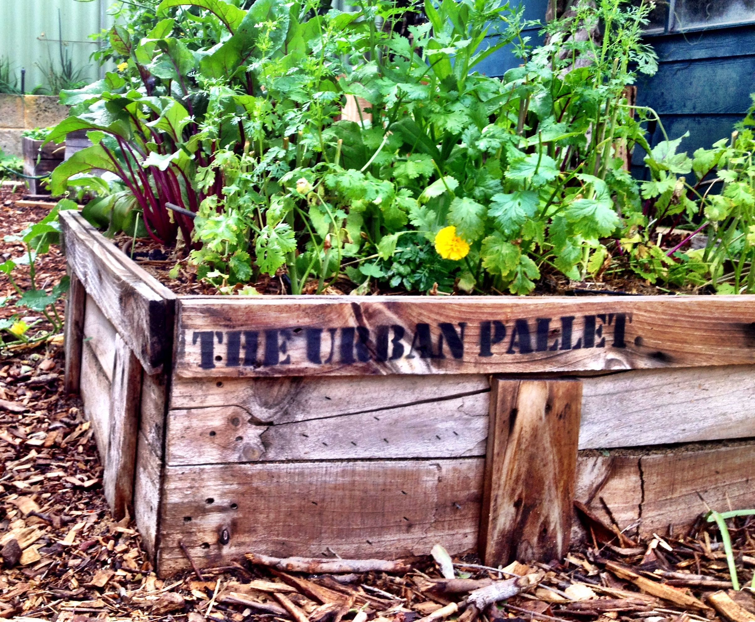Rustic Wooden Planter Boxes From 50 Perth Wa Contact Theurbanpallet Gmail Com Wooden Planter Boxes Wooden Planters Planter Boxes