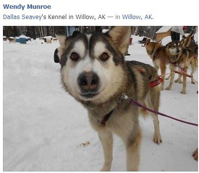 Dallas Seavey S Kennel In Willow Ak In Willow Ak Our Travel