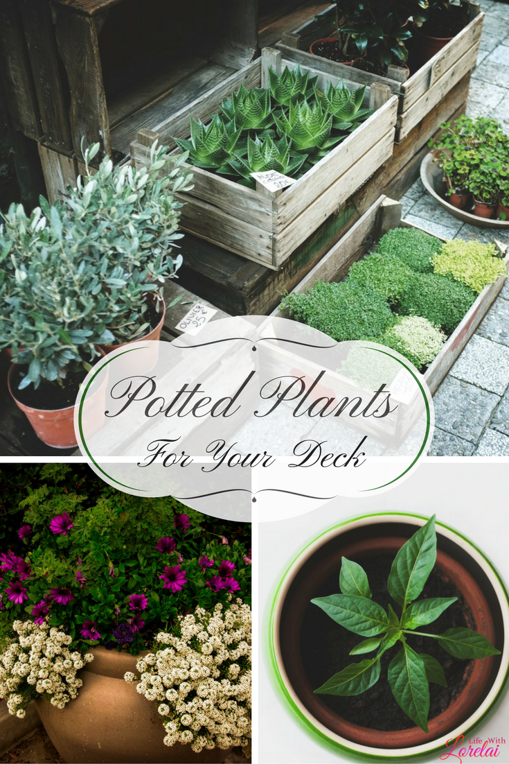 potted plants keep your deck colorful and festive winter months