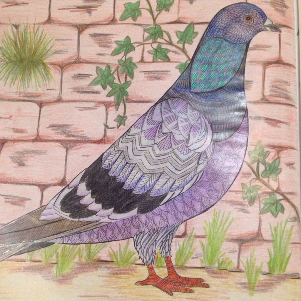 Image Result For Animal Kingdom Coloring Book Pigeon Finished