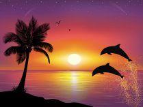 Fundos De Golfinhos Com Imagens Pintura Silhueta Pinturas Da