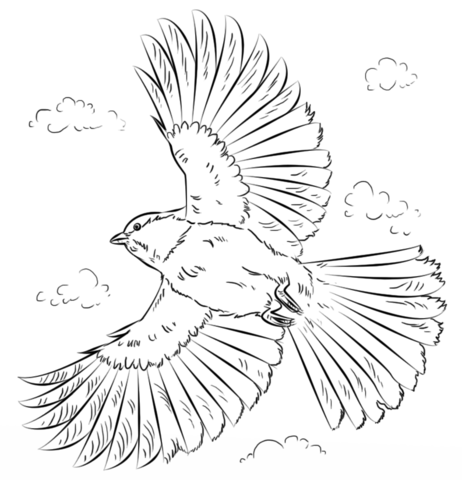 Black Capped Chickadee In Flight Coloring Page Free Printable Coloring Pages Bird Drawings Bird Line Drawing Bird Coloring Pages