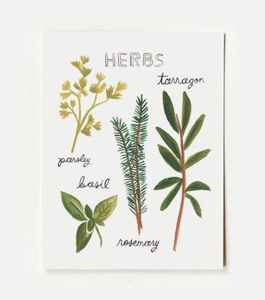 herbs doodles