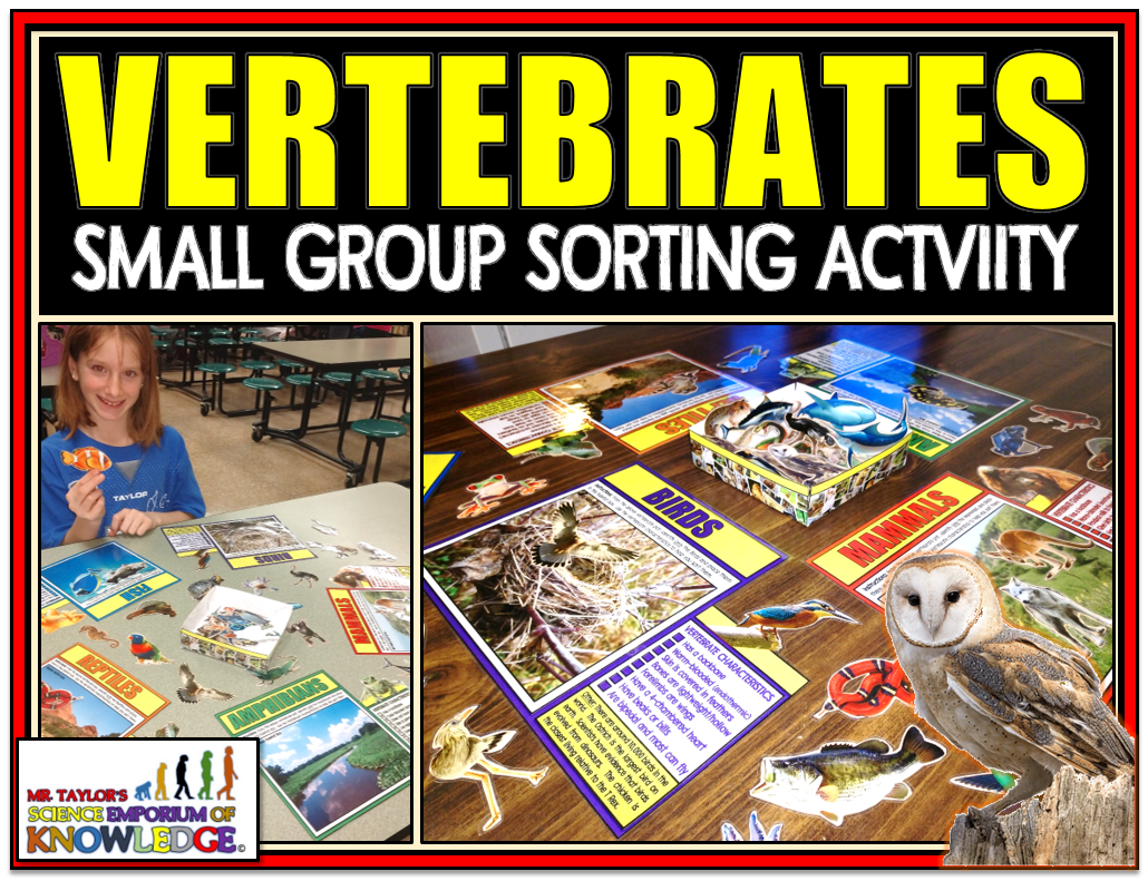 Animal Classification Vertebrate Sorting Activity