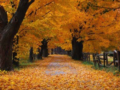 Streets Of Gold The Cracker Lady S House Wordless Wednesday Streets Of Gold Pink Trees Beautiful Tree Nature