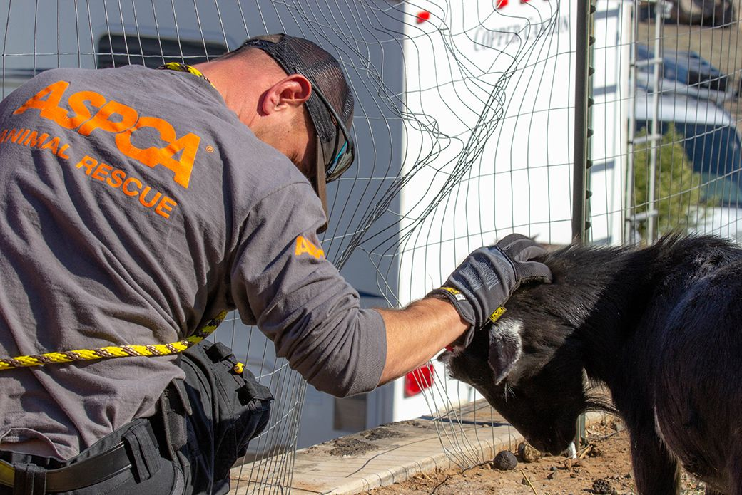 Assists in Rescuing AtRisk Animals Displaced by Kincade