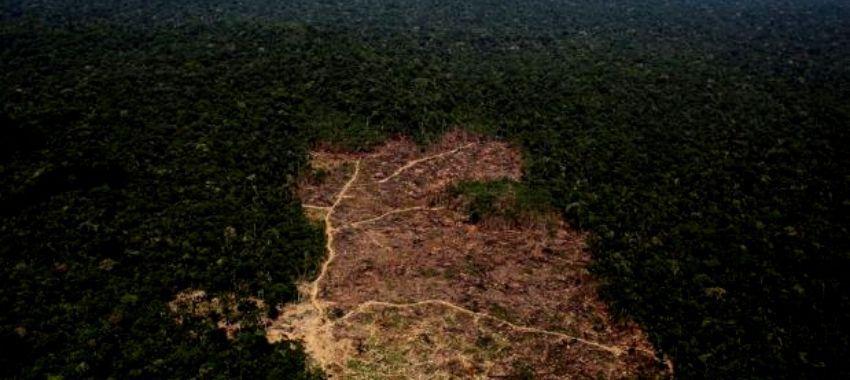La deforestación en la Amazonía brasileña alcanzó cifra récord en mayo