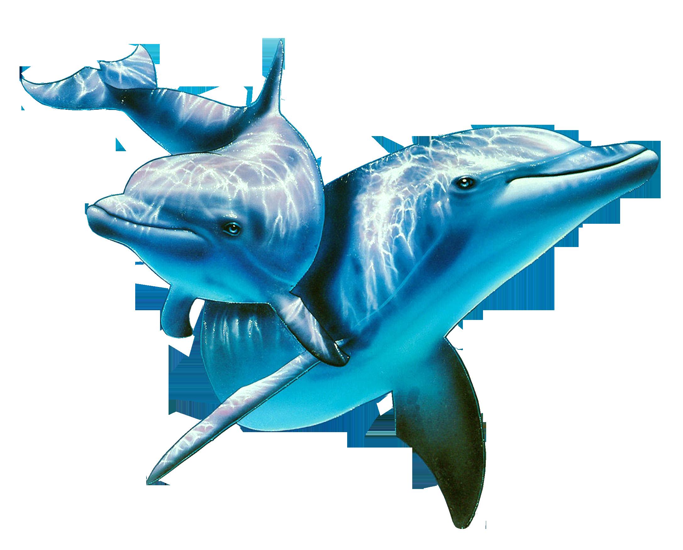 даже картинки дельфины на белом фоне вода, газ, свет