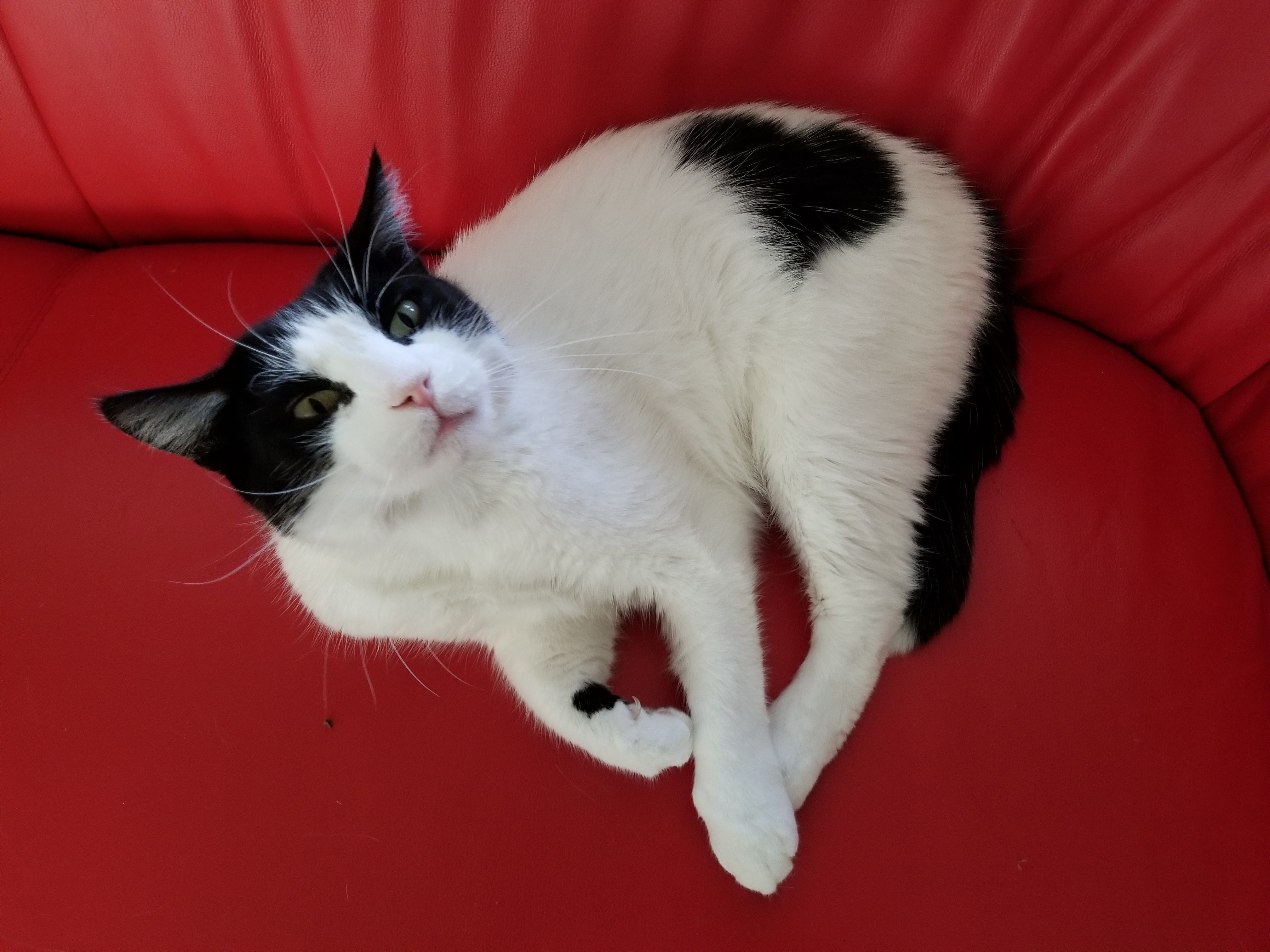 Our Hip Valentine Buster Kittens Cutest Cute Animals Cat Makeup Halloween