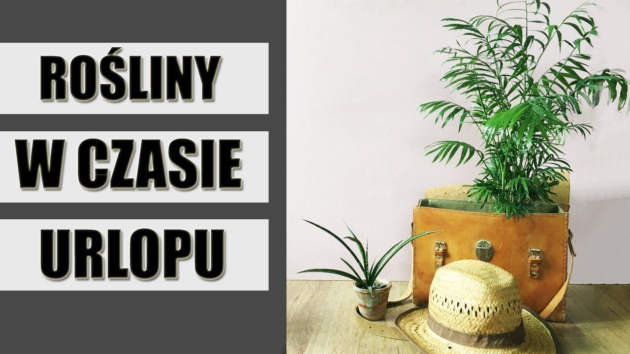 Jak Dbac O Rosliny Domowe Podczas Urlopu Plants Indoor Plants Lettering