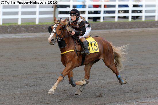 Finnhorse gelding Baletin Salama in monte racing