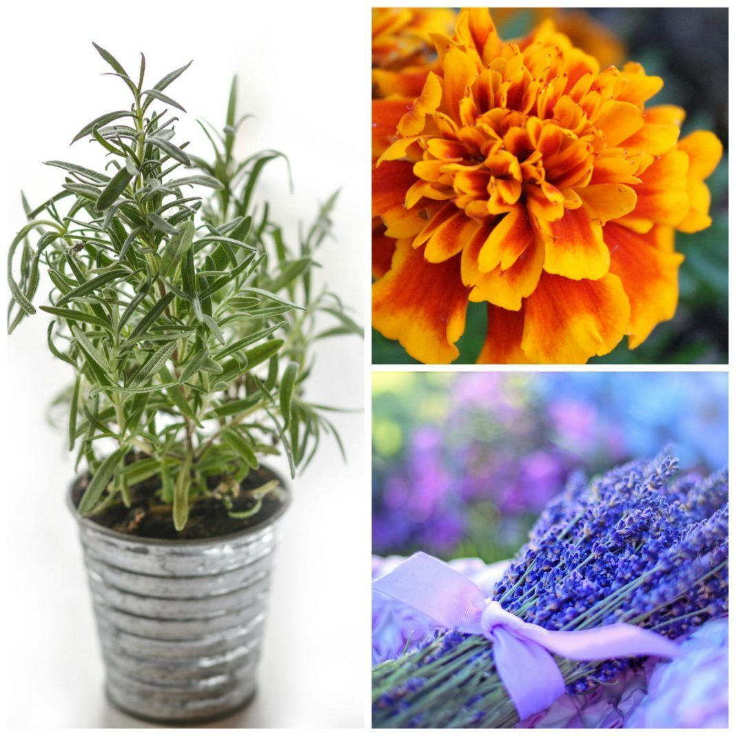 8 Medicinal House Plants That'll Bring Life to Your